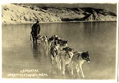 Petropavlovsk-Kamchatsky. Team of sled dogs