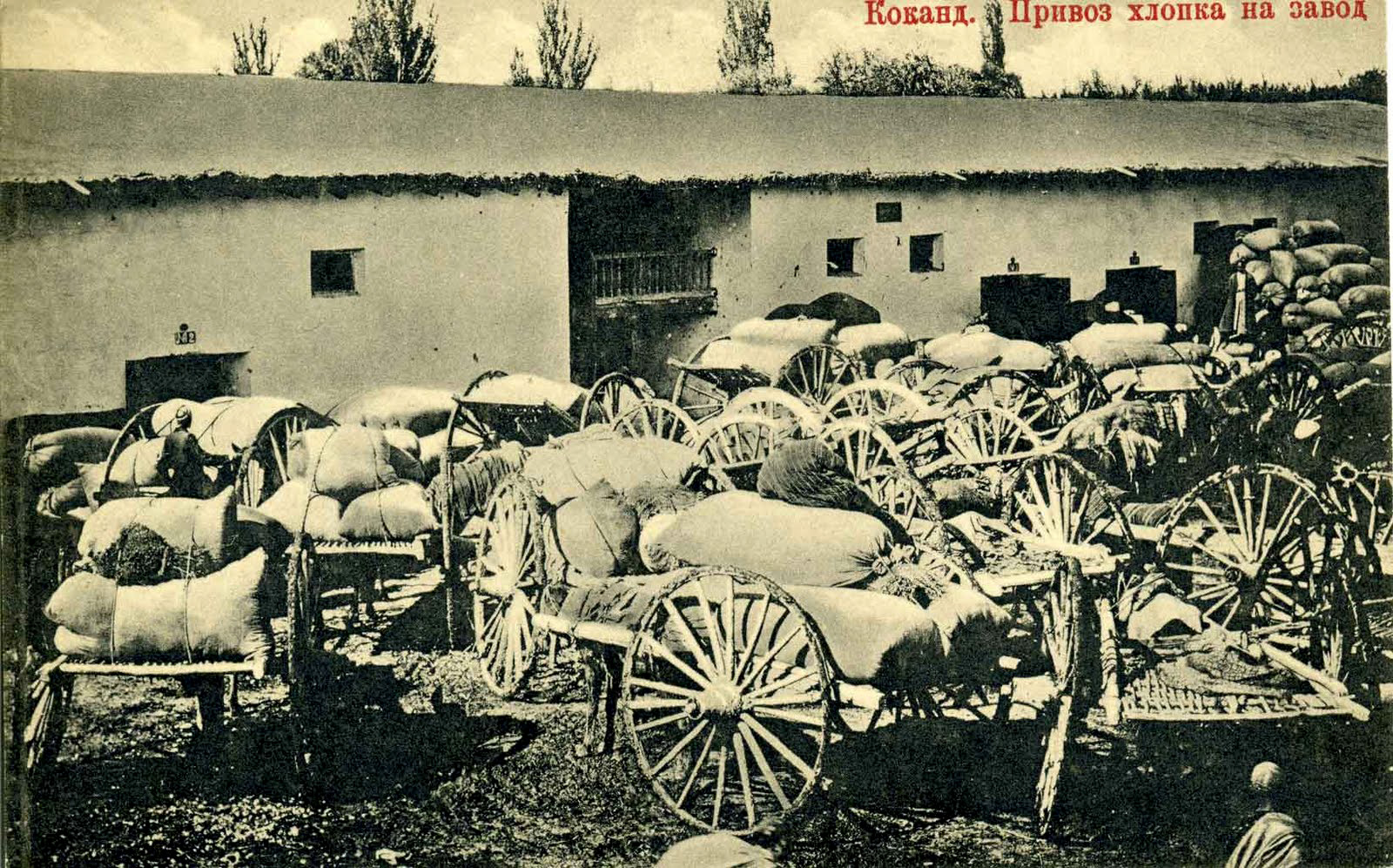 Kokand. Delivery of cotton on plant